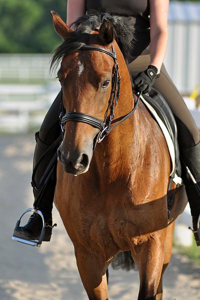 Horses July 2011 416a.jpg