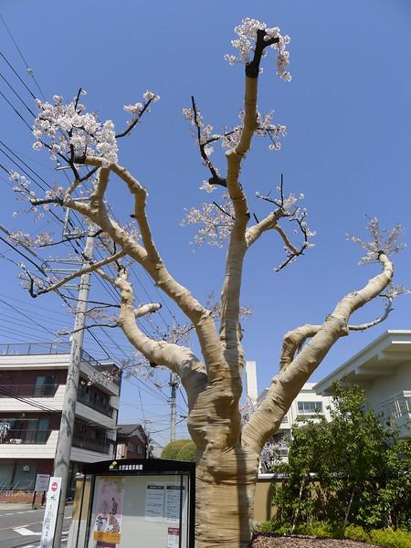 20-Japan2011_0882.JPG