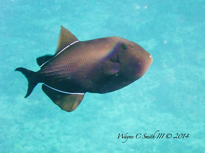 Kauai Fish