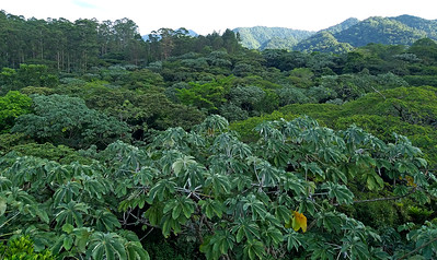 TREES, FLOWERS, OTHER NATURE at Arenal