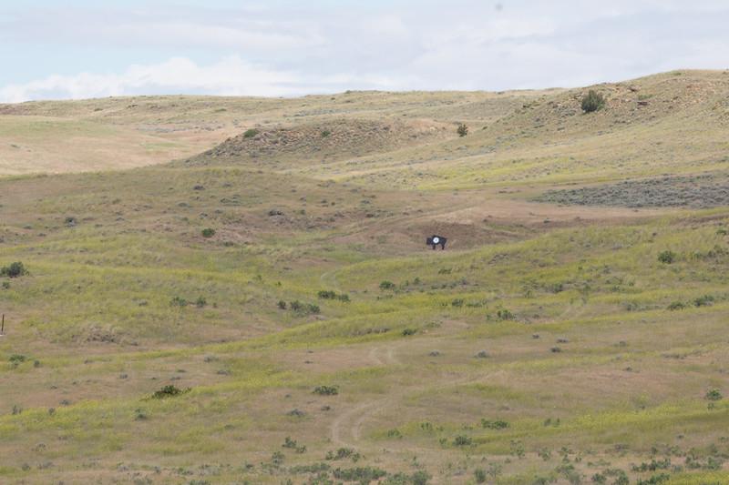 Quigley Buffalo Shoot - 800yd Target