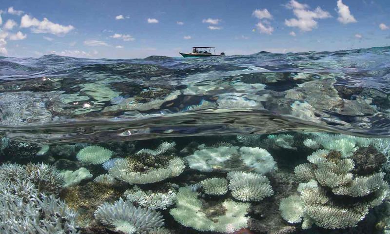 coral.1464781580-2.jpg