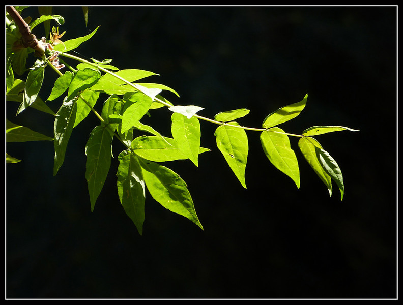 2012-04-Costa-Argento-30.jpg