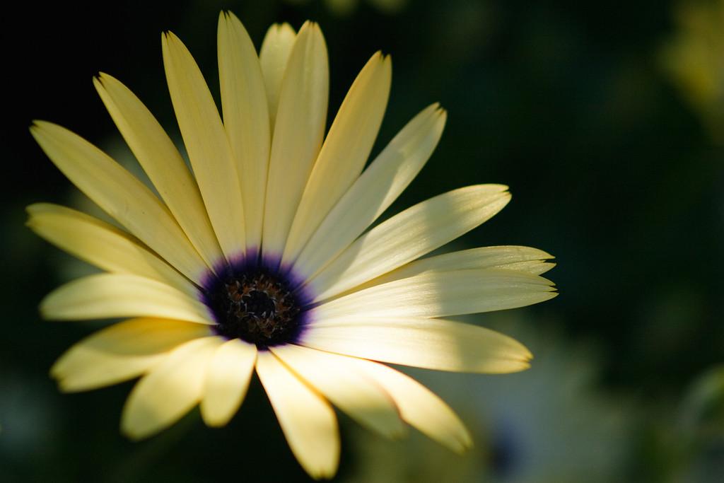 IMAGE: http://www.smugmug.com/photos/i-XJbMNmR/0/XL/i-XJbMNmR-XL.jpg