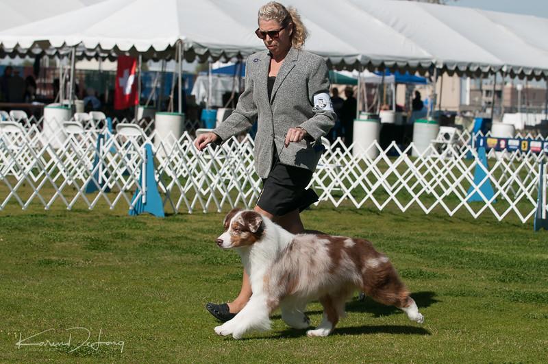 20170205_Australian Shepherds_Lost Dutchman Kennel Club-183.jpg