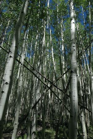 Oak Creek-PineFlat Camping-Hiking-26-29MAY2017