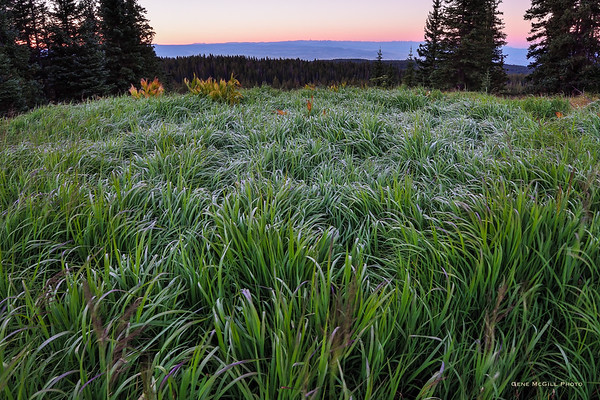 Grand Mesa, Early Morning, August 25, 2017