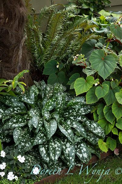 Lisa Bauer - designer's garden_1323.jpg