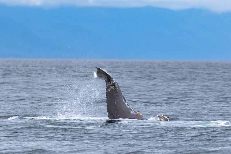 Alaska 2015 - Juneau -  072615-415.jpg