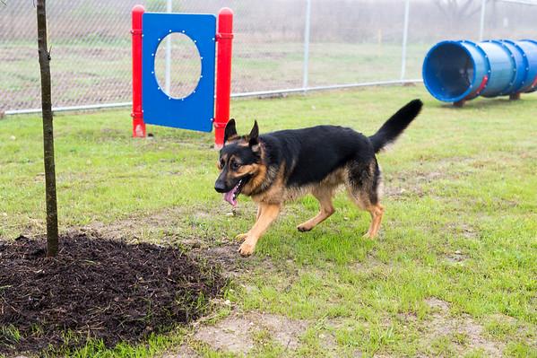 Pasadena Petsafe Dog Park