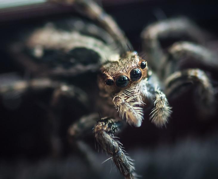 back-door-spider-4927.jpg