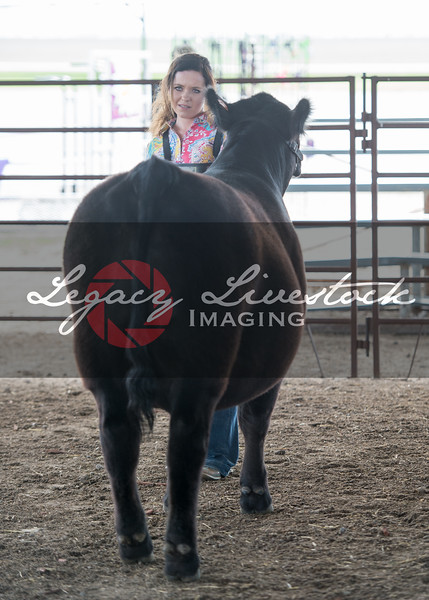 Beauty and the Beast Steer Candids
