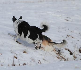 2-13-10-snowdogs