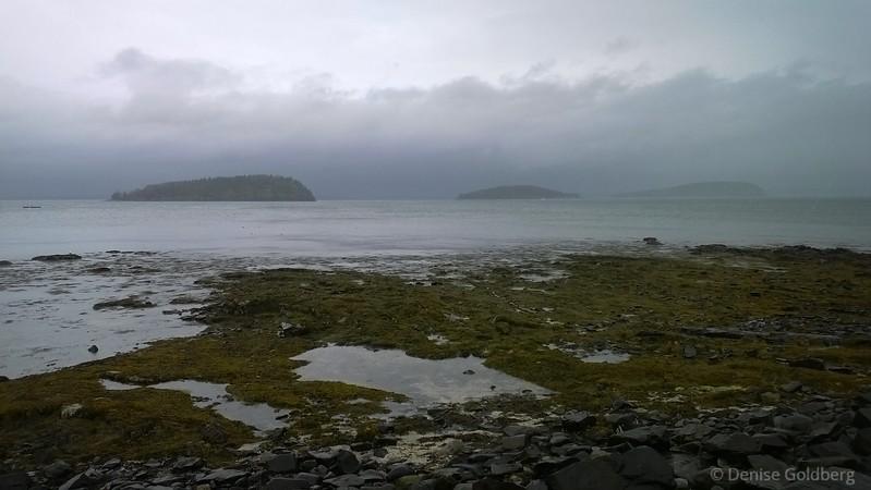 a walk in the rain, Shore Path, Bar Harbor