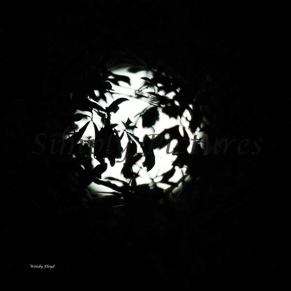 moon 095