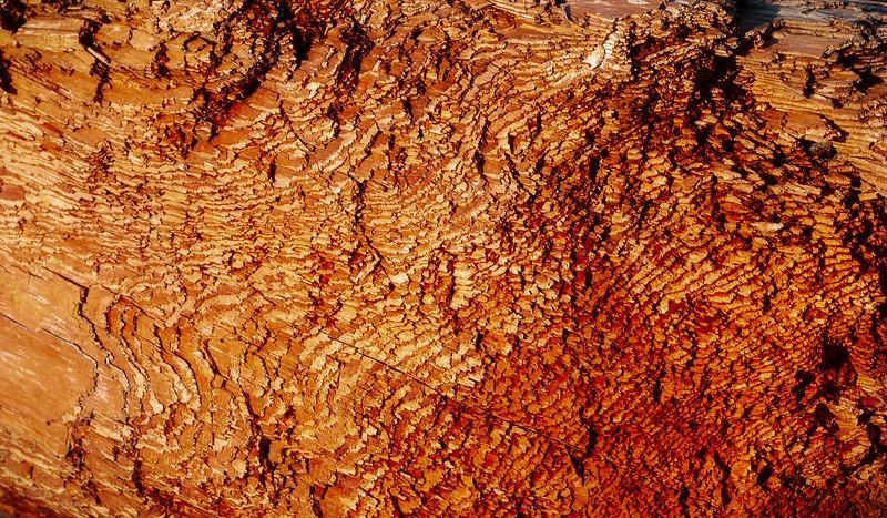 Driftwood, Harris Beach State Park, Oregon, 2002