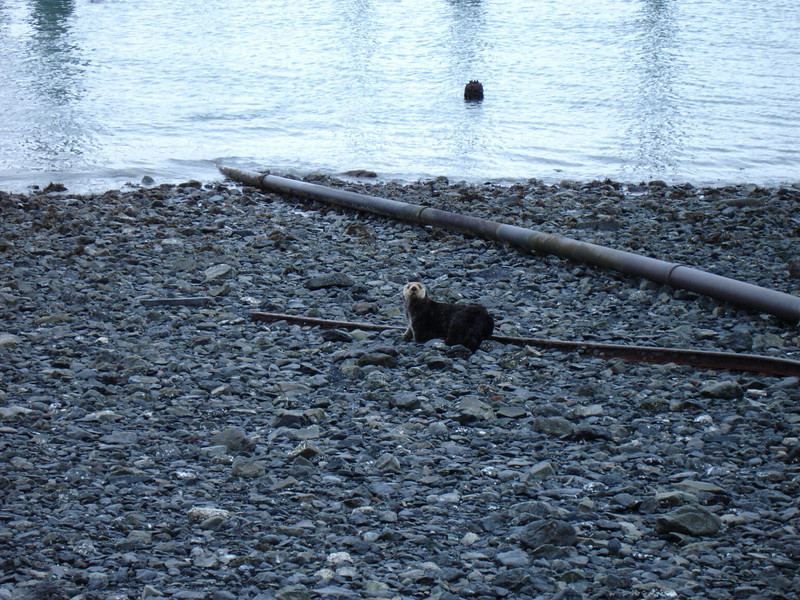 Alaska 2008 060.jpg