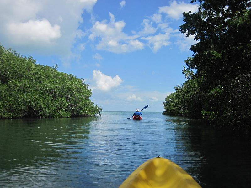 paddling mangrove creeks-6.jpg