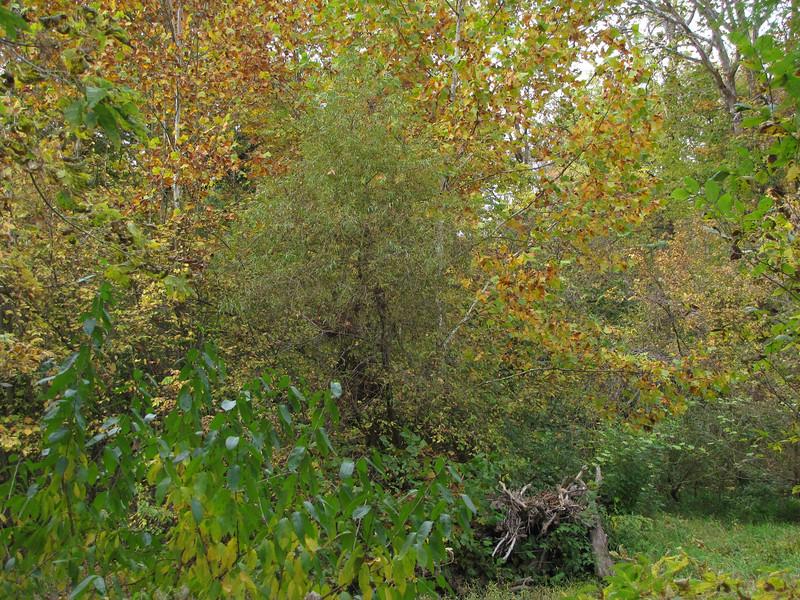 20111009-2011-10-0914-10-1011091.jpg