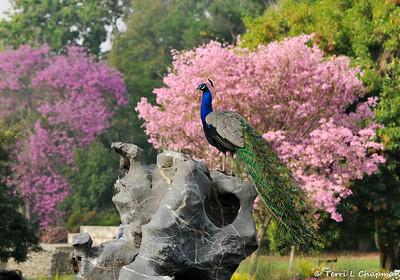 Birds Of Spring 2015
