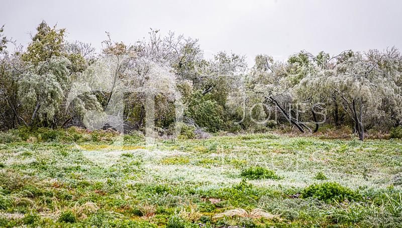 icy_rain_10.27.2020-14.jpg