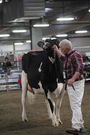 Midwest Spring National Holstein Senior Cows 2017