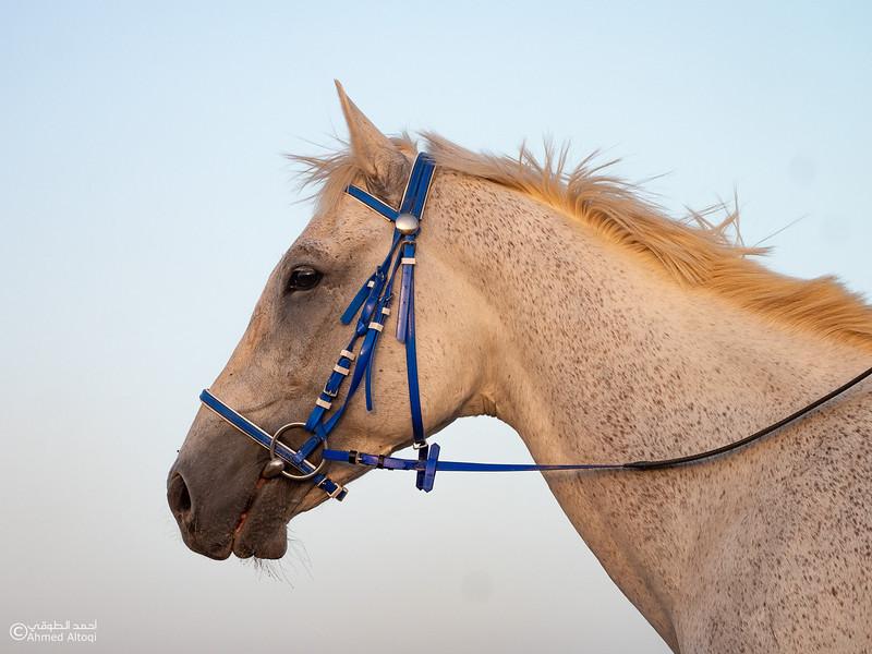 Horse - Ibra.jpg