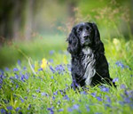 Dogs & Pet Photography in Perthshire by David Brown Photographer
