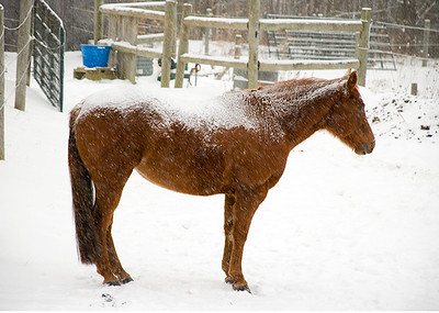 Hot Toddy for Horses