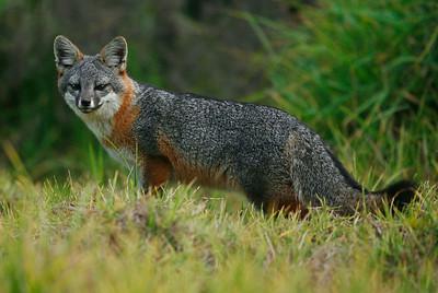 Channel Islands Wildlife