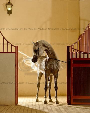 Haddar in stall