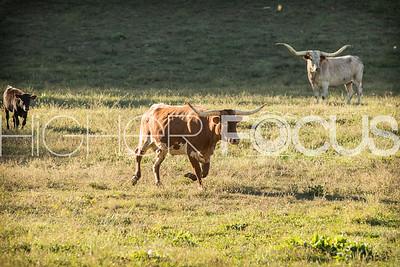 Bidner animals
