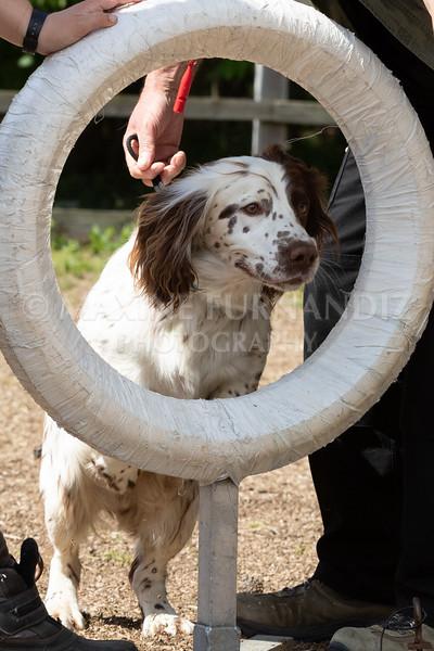 Dogs-8066.jpg