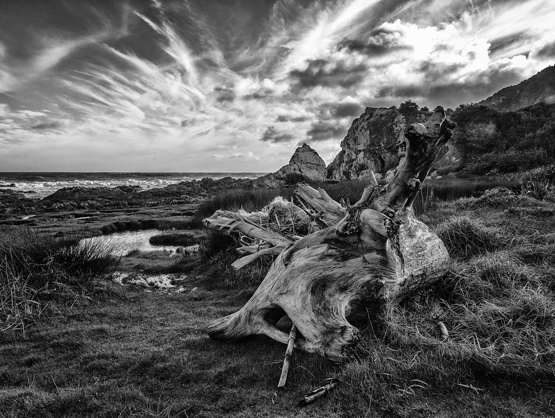Driftwood - How do it get there? (large)