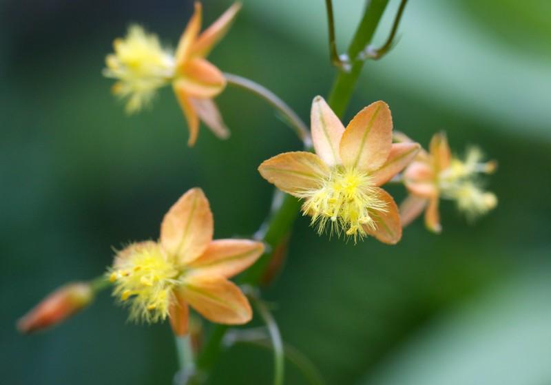 orange and yellow wildflower