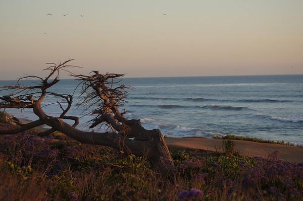 carlsbad beach 3/12