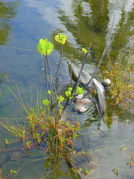 Plants in Lagoon