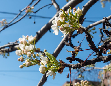 Spring Walks in Yonkers and Riverdale