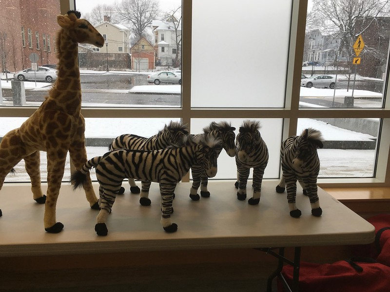 In spite of the Friday afternoon snowfall,  wild animals and equipment for building the golf course arrived on schedule, ready for set-up beginning at 4pm (when the library closes).