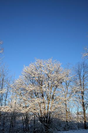Snow Trees 2008