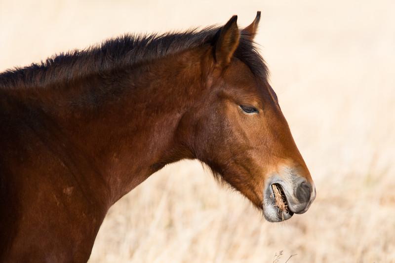Nevada Mustangs Winter 2020-2.jpg