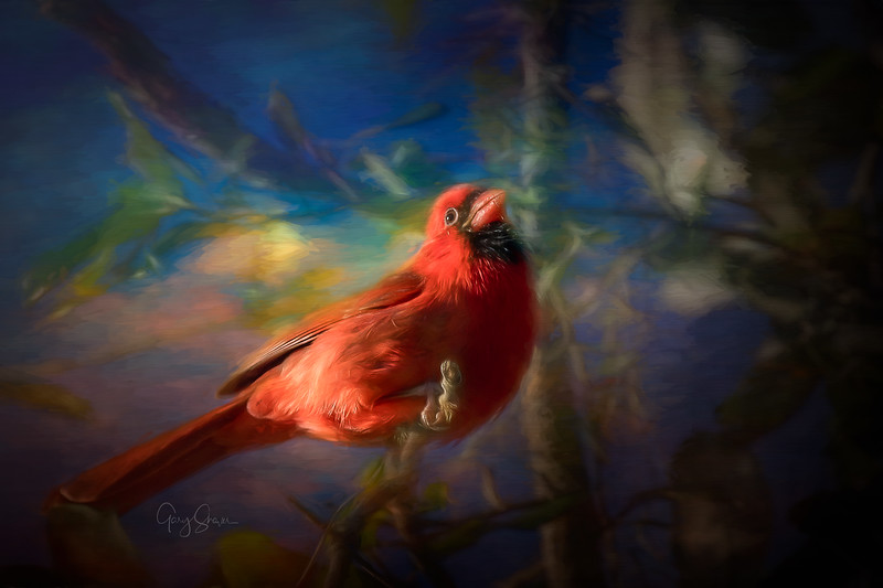 Cardinal 01 WS.jpg