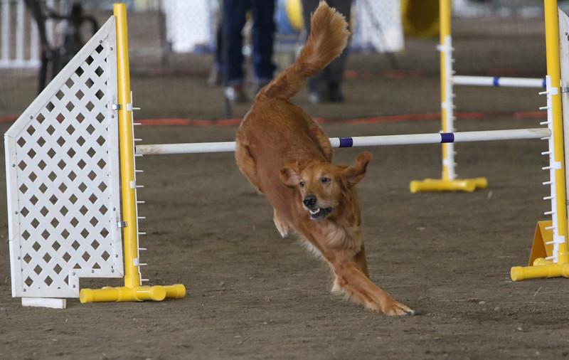 3-10-2019 Bloodhound-0283.jpg