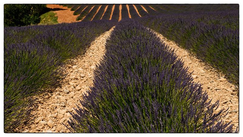 bilevel lavender.jpg