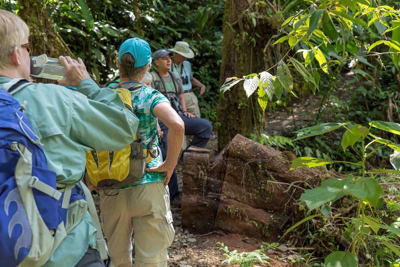 Costa Rica 2015-4113.jpg