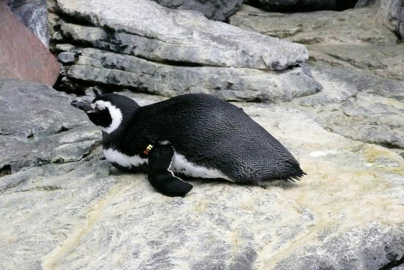 Penguin. Oceanário, Parque das Nações, Lisbon
