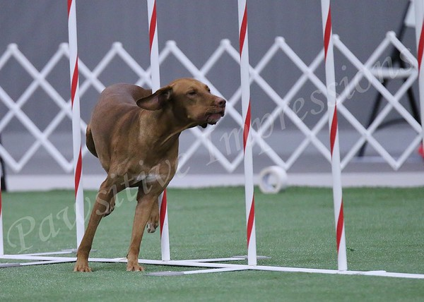 GSDCA All Breed Agility Open Standard -JWW Saturday  10 10 2015