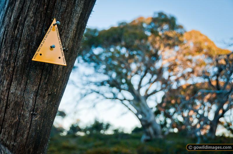 Australian Alps Walking Track (AAWT) marker at  Mt Speculation