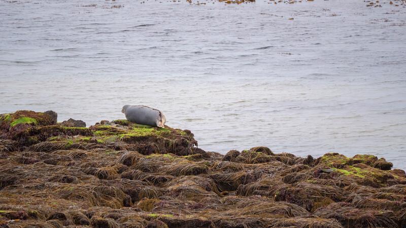 Ireland-Aran-Islands-Inishmore-16.jpg