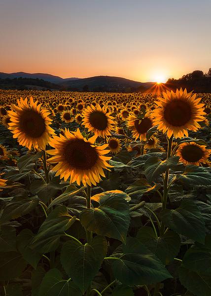 La amenità della sole